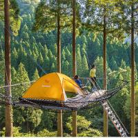 樹上テント